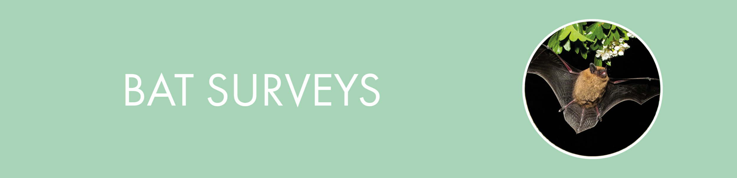 batsurveys.png