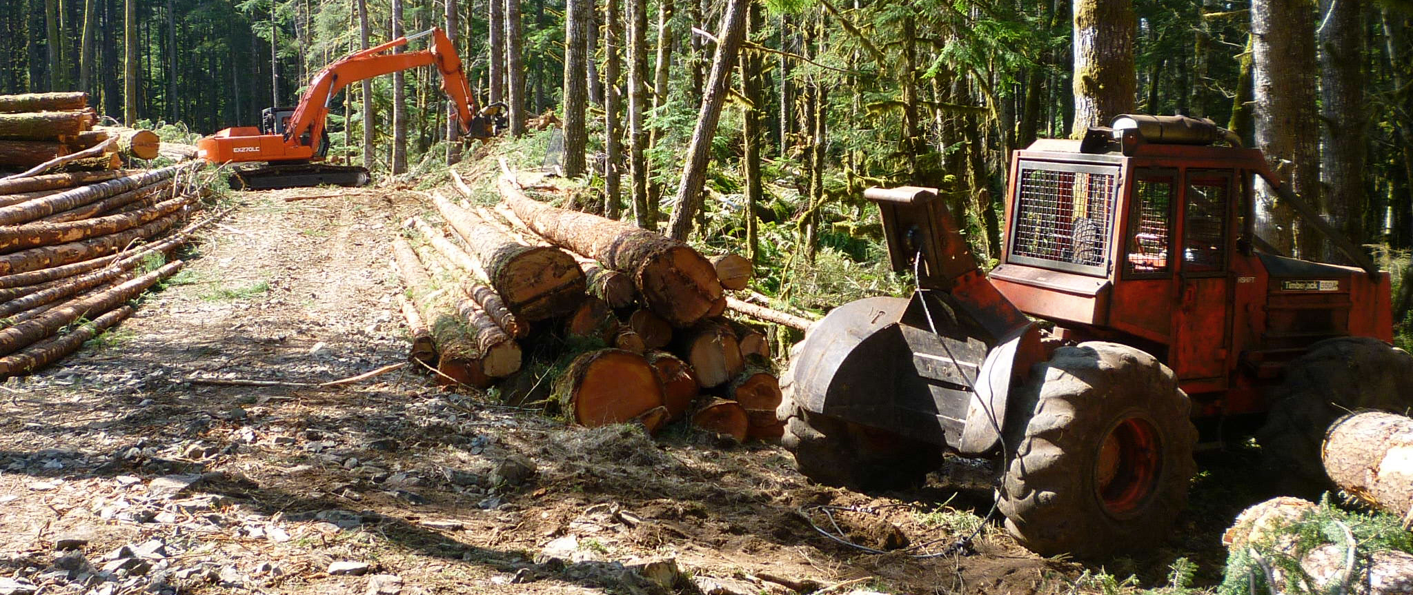woodland_pano.jpg