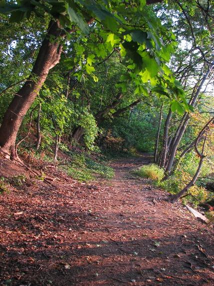 Trail around Indian Pond