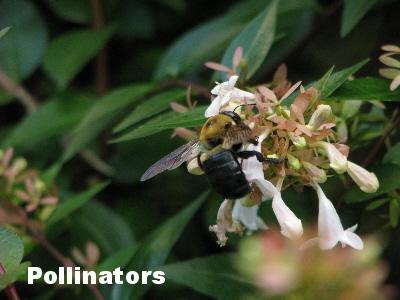 Pollenationresize.jpg