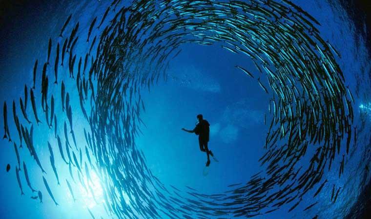 hin-daeng-muang-diving.jpg