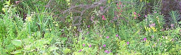 gabino-lawn-landscaping-lawn-irrigation-callout-11-03-15.jpg