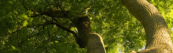 gabino-lawn-landscaping-tree-services-callout-11-03-15.jpg