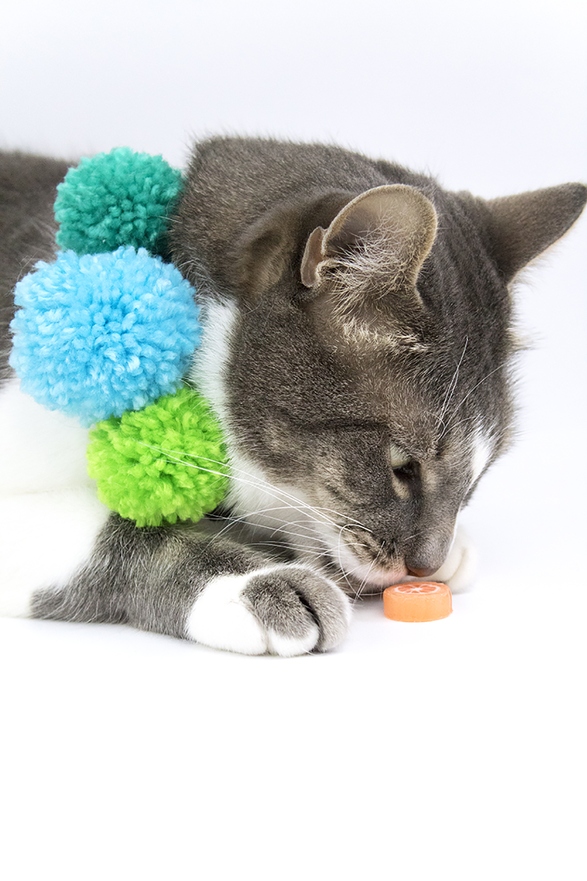 These pom pom collars are so cute, even cats can't help but love them! They're easy to make and fun to wear, so grab your pom-pom maker and your yarn. We're about to get crafty! #catcrafts #dogcrafts #pompomcrafts