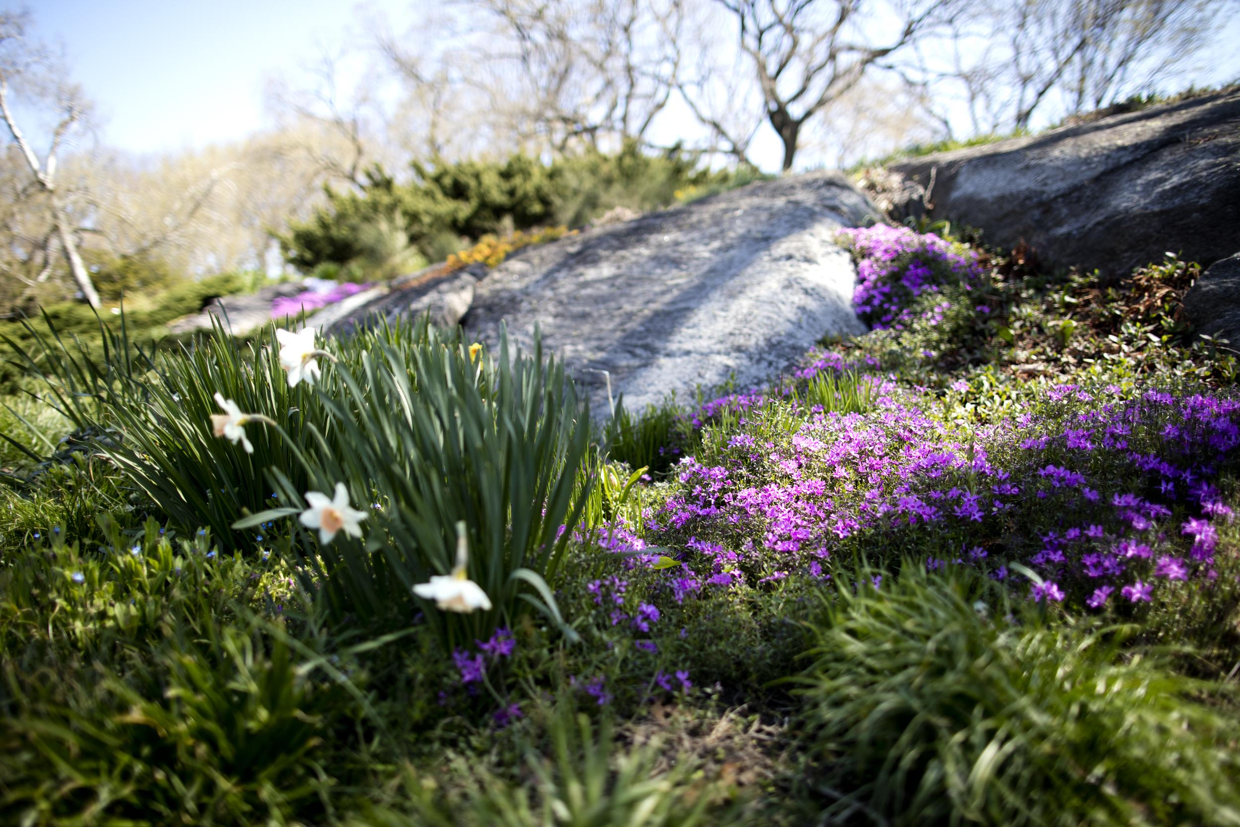 flowers_4.17.16.jpg