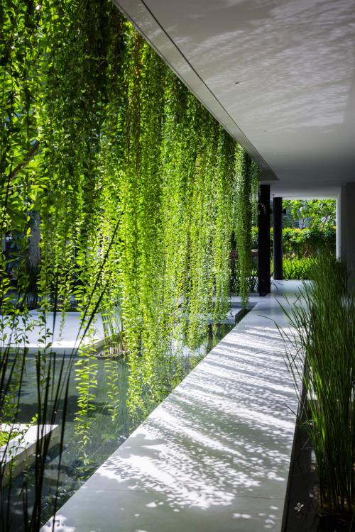 hanging_foliage.jpg