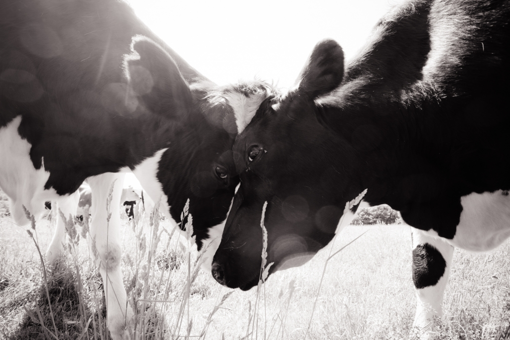 Photo: Jo-Anne McArthur | We Animals