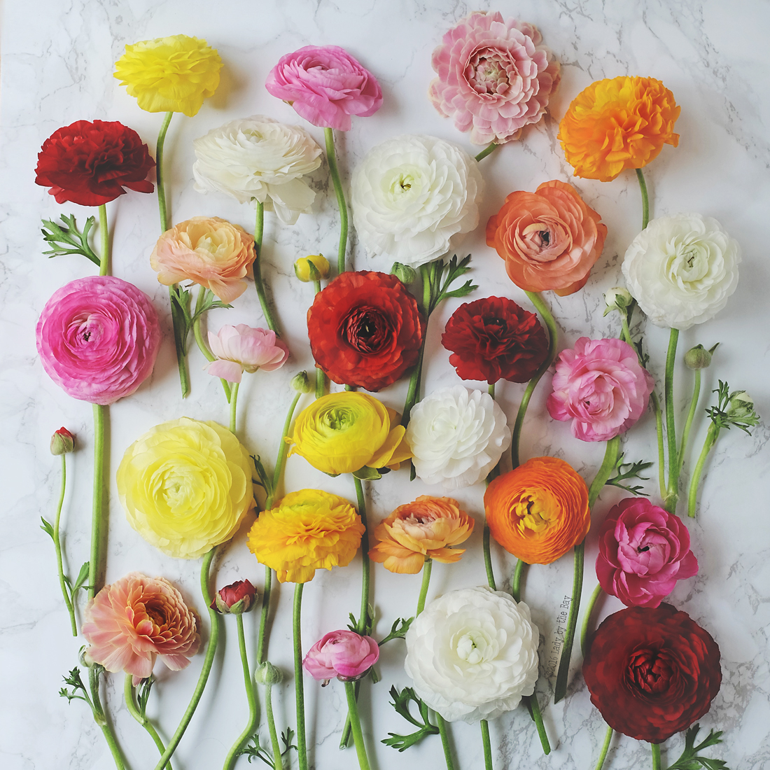 Ladybythebay-Ranunculus Love