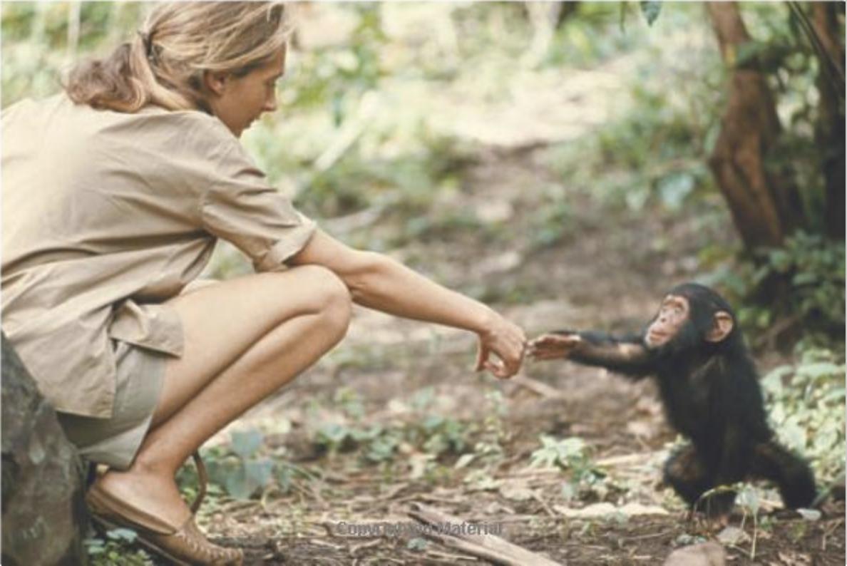 Photo: Hugo Van Lawick/National Geographic Collection