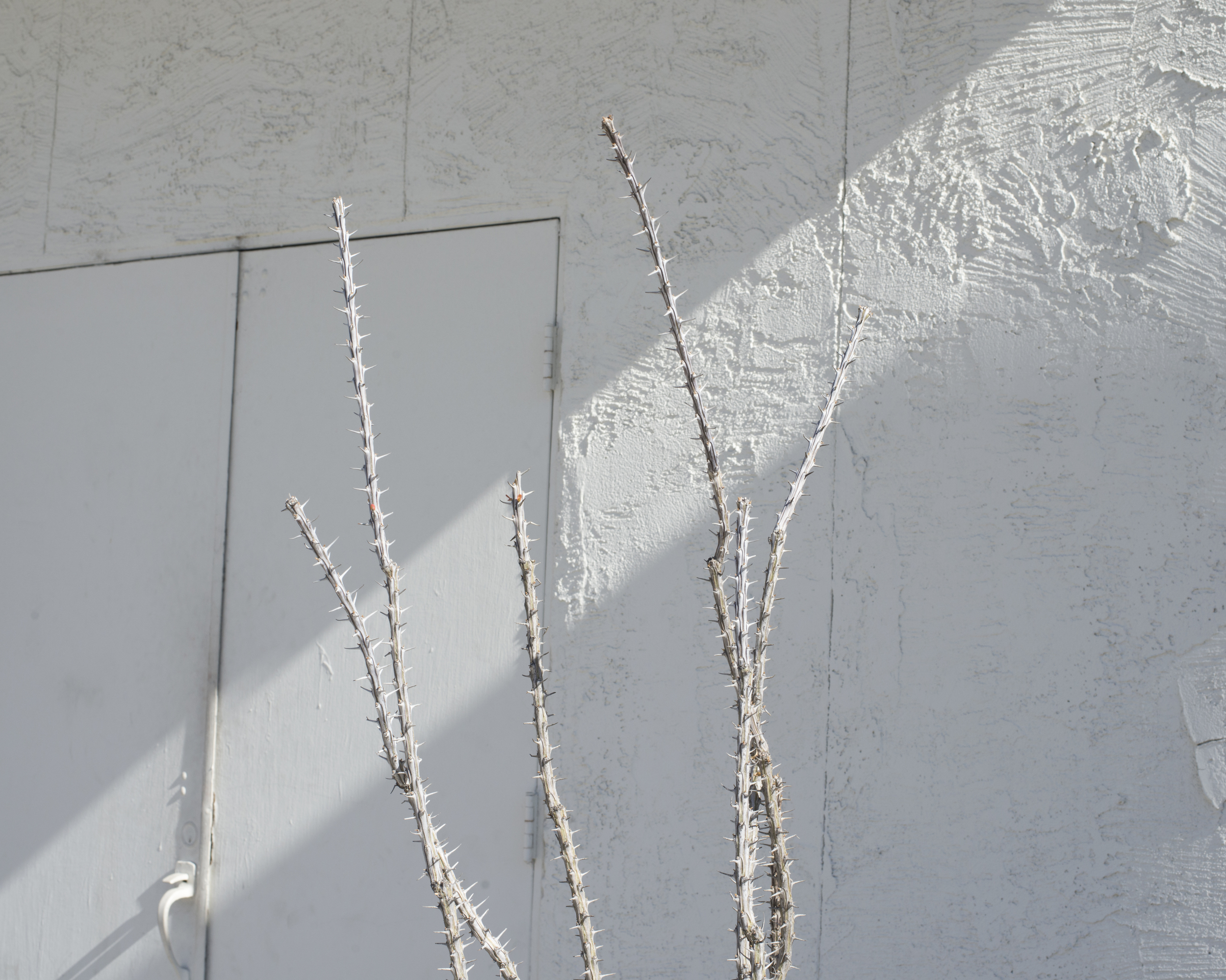 white thorns copy.jpg