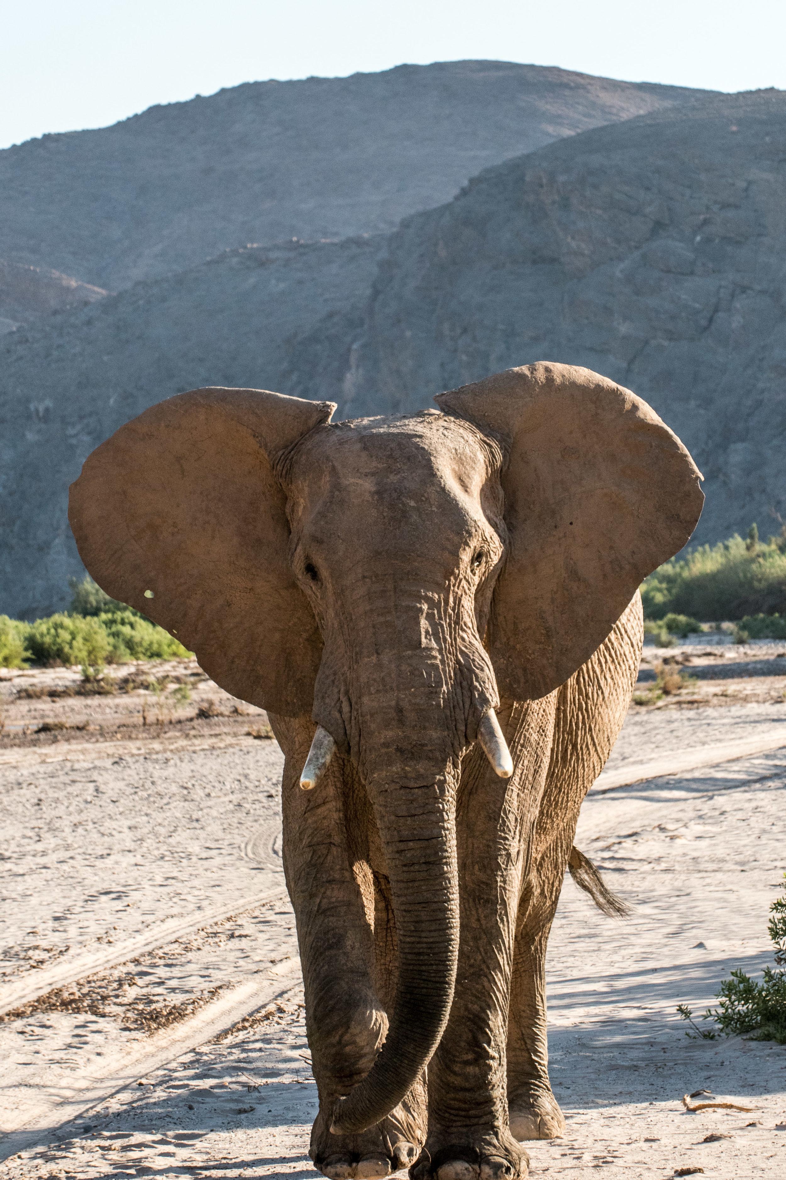 Namibia Keyte-LR-111.jpg
