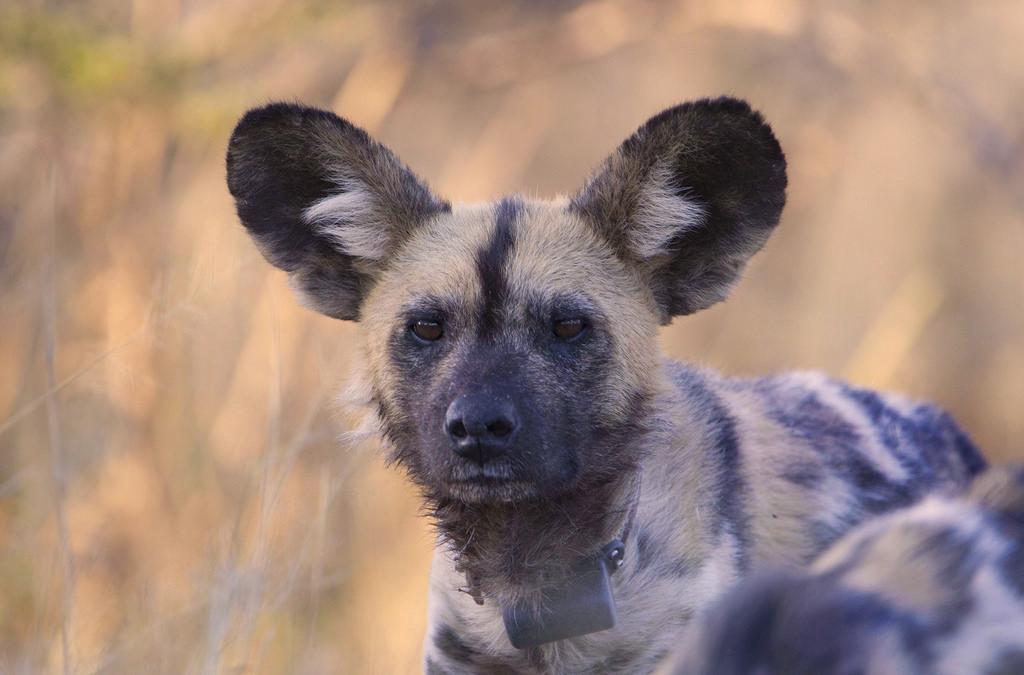 Hyena TourismOffice.jpg