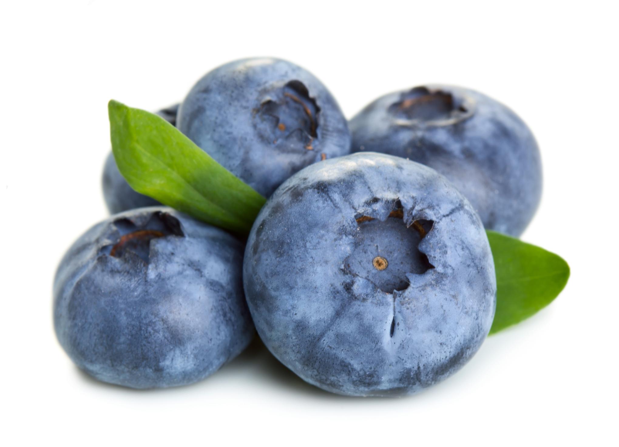 Blueberry   (Opuntia ficus-indica)