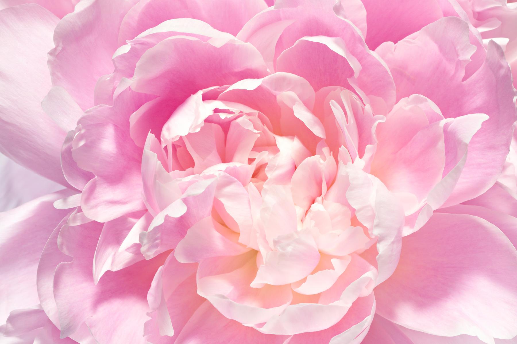 flower_023.jpg