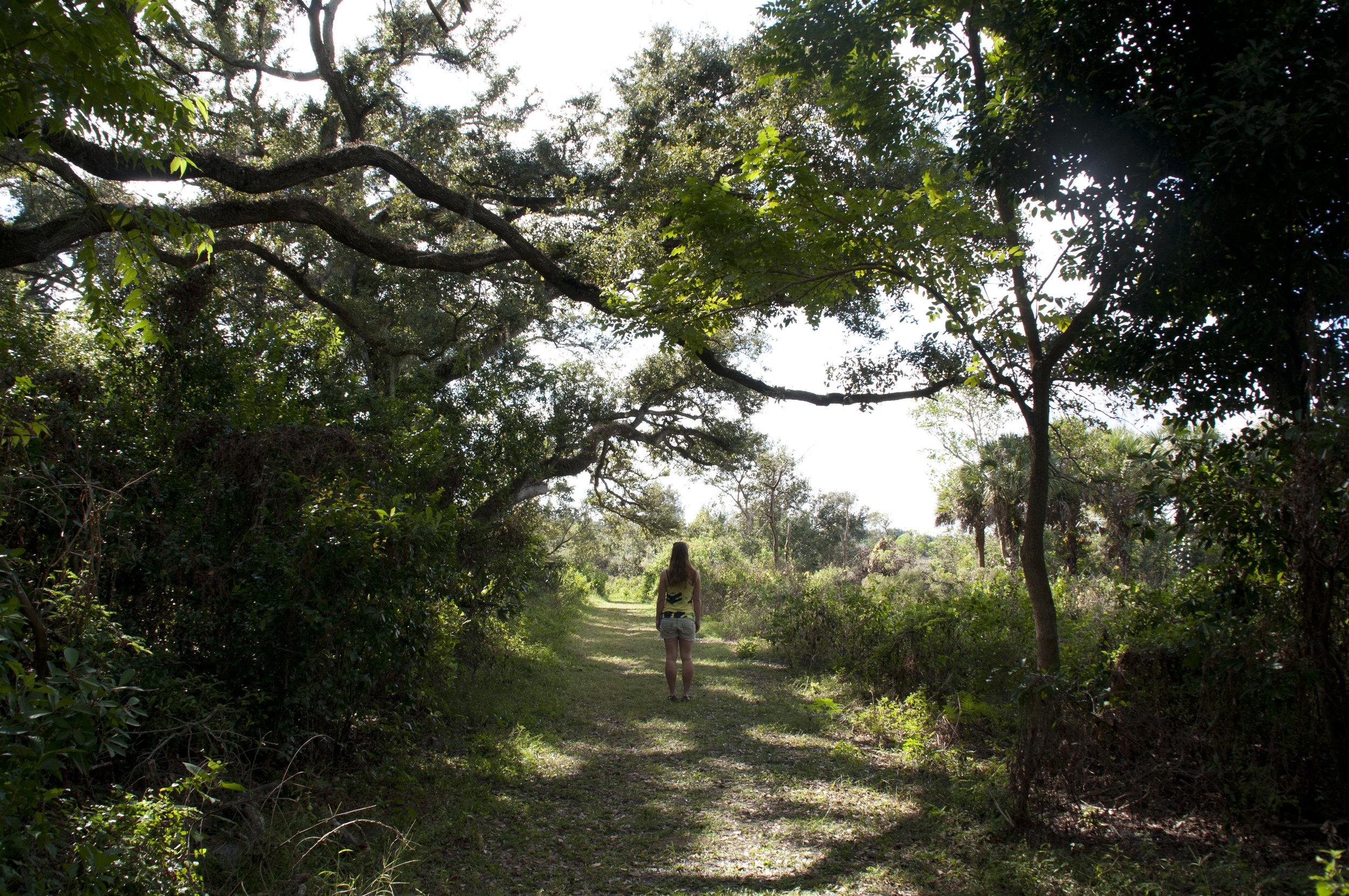 FLORIDA-FOREST.jpg