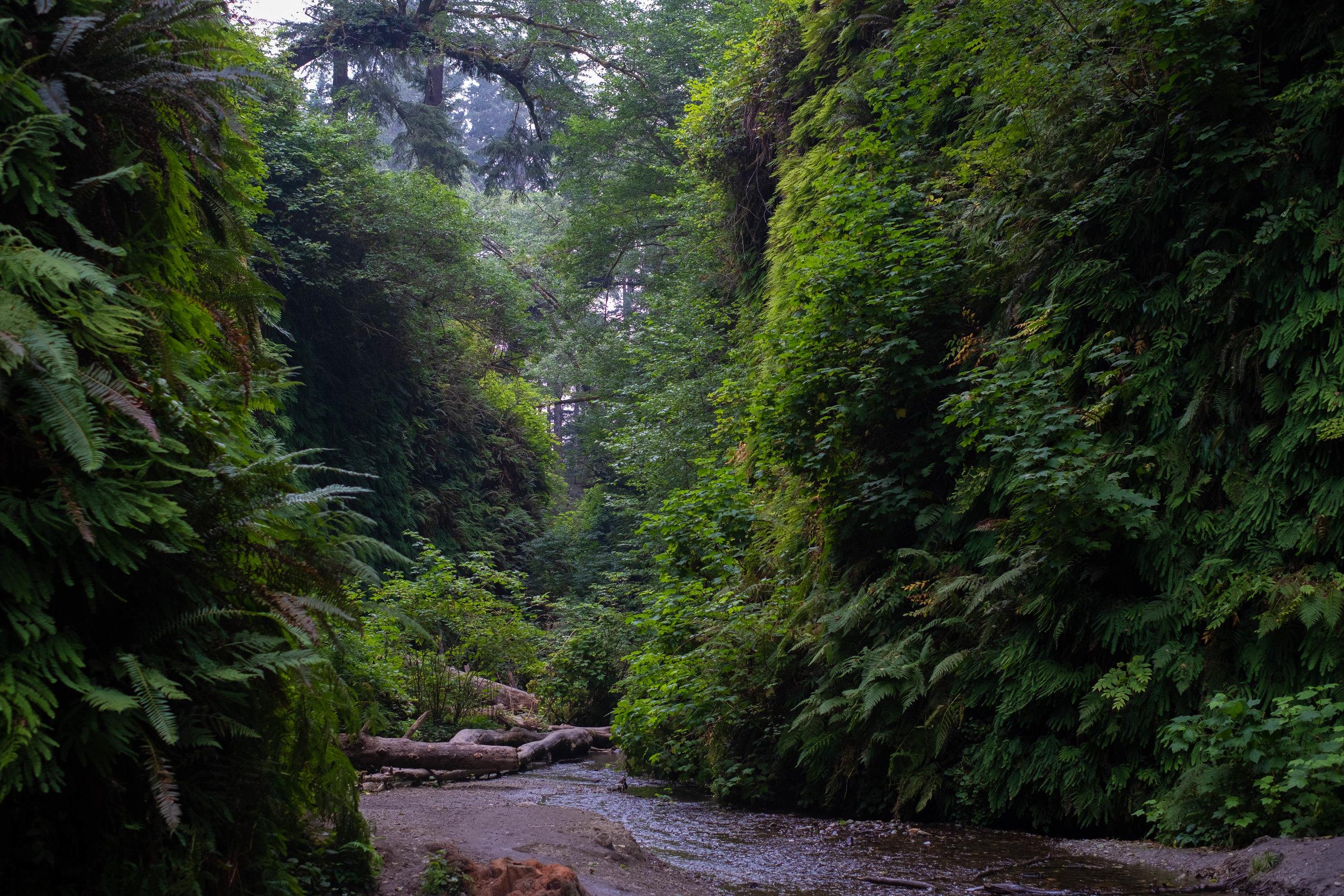 prairie creek redwoods  | Jakee Zaccor | Jacqueline Zaccor | JZaccor Designs