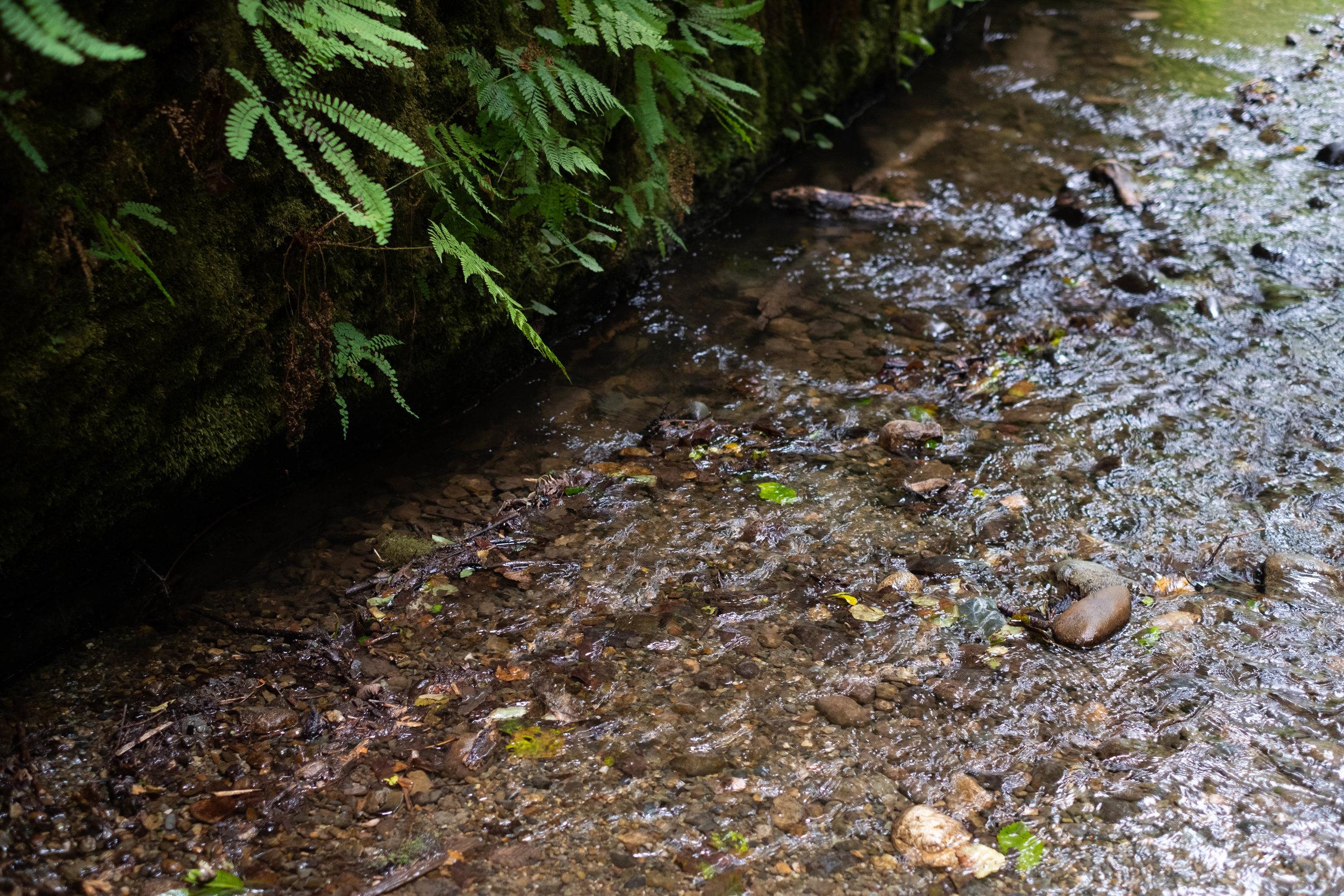 PARIRIE CREEK Redwoods State Park | Jakee zaccor | jzaccor designs
