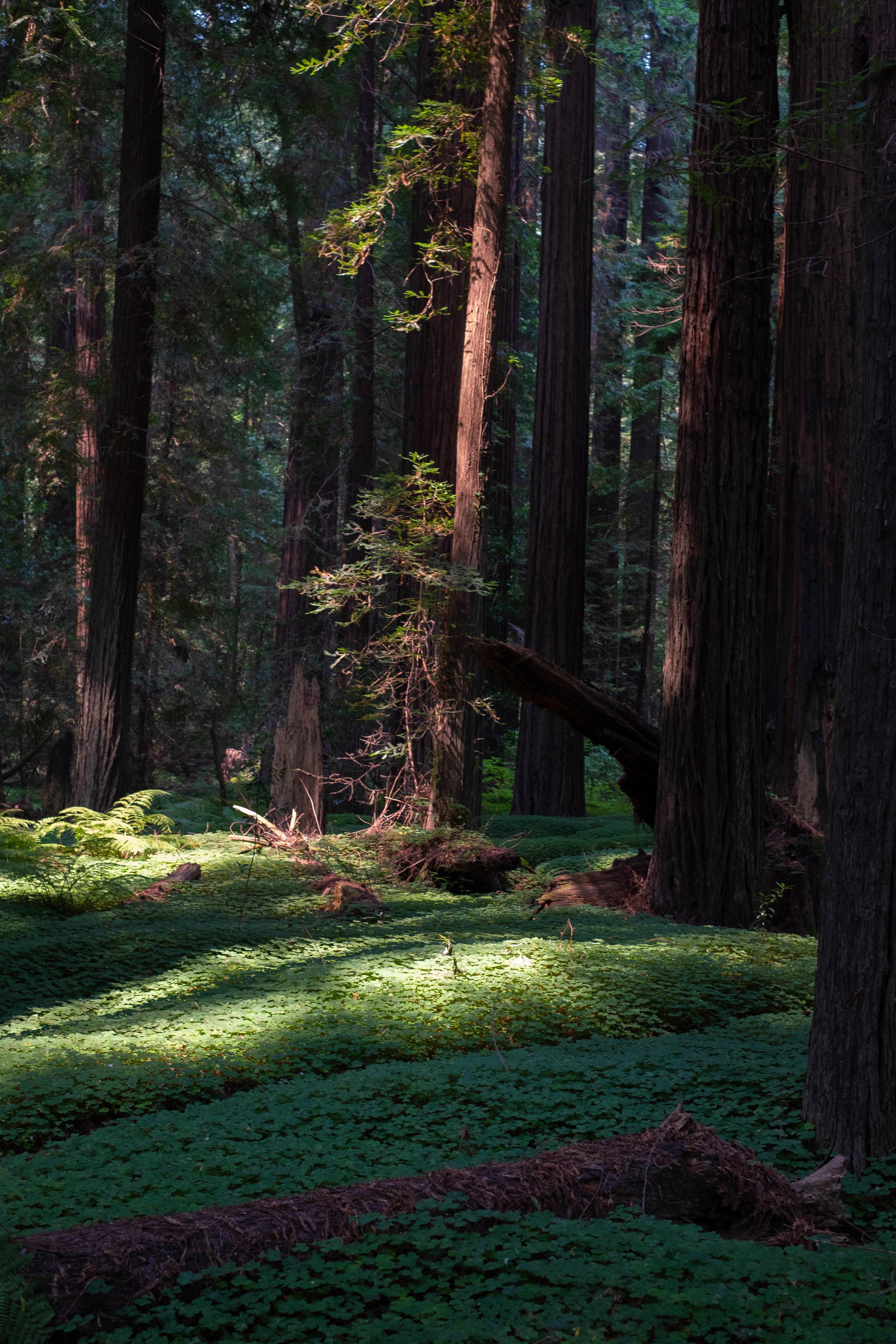 Humbolt Redwoods State Park | Jakee zaccor | jzaccor designs