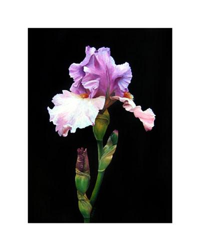 Purple-Iris-SS-web-B.jpg