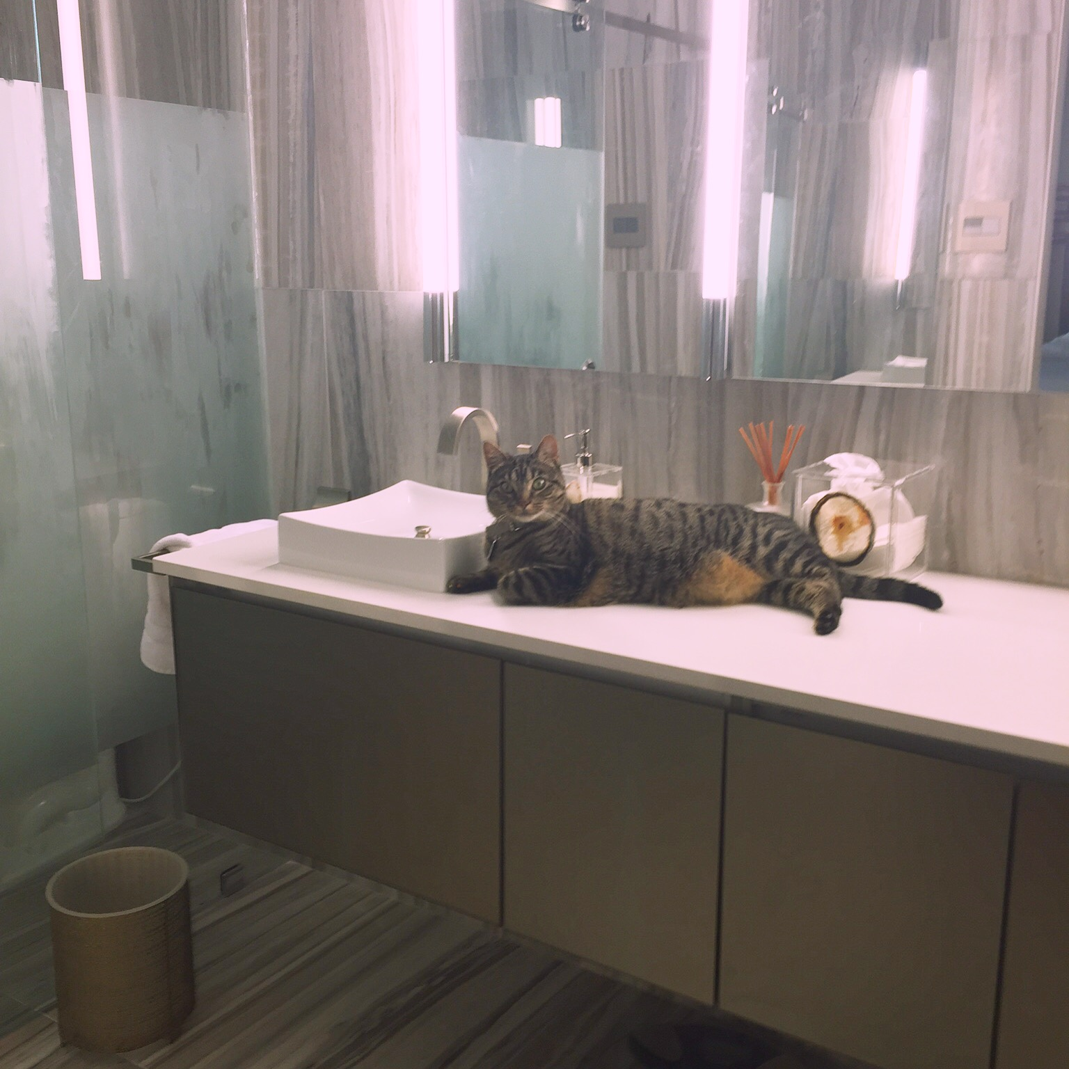 http://jillornelas.com/blog/2016/7/8/relax-5-tips-for-how-to-love-your-pets-and-your-home.jpg