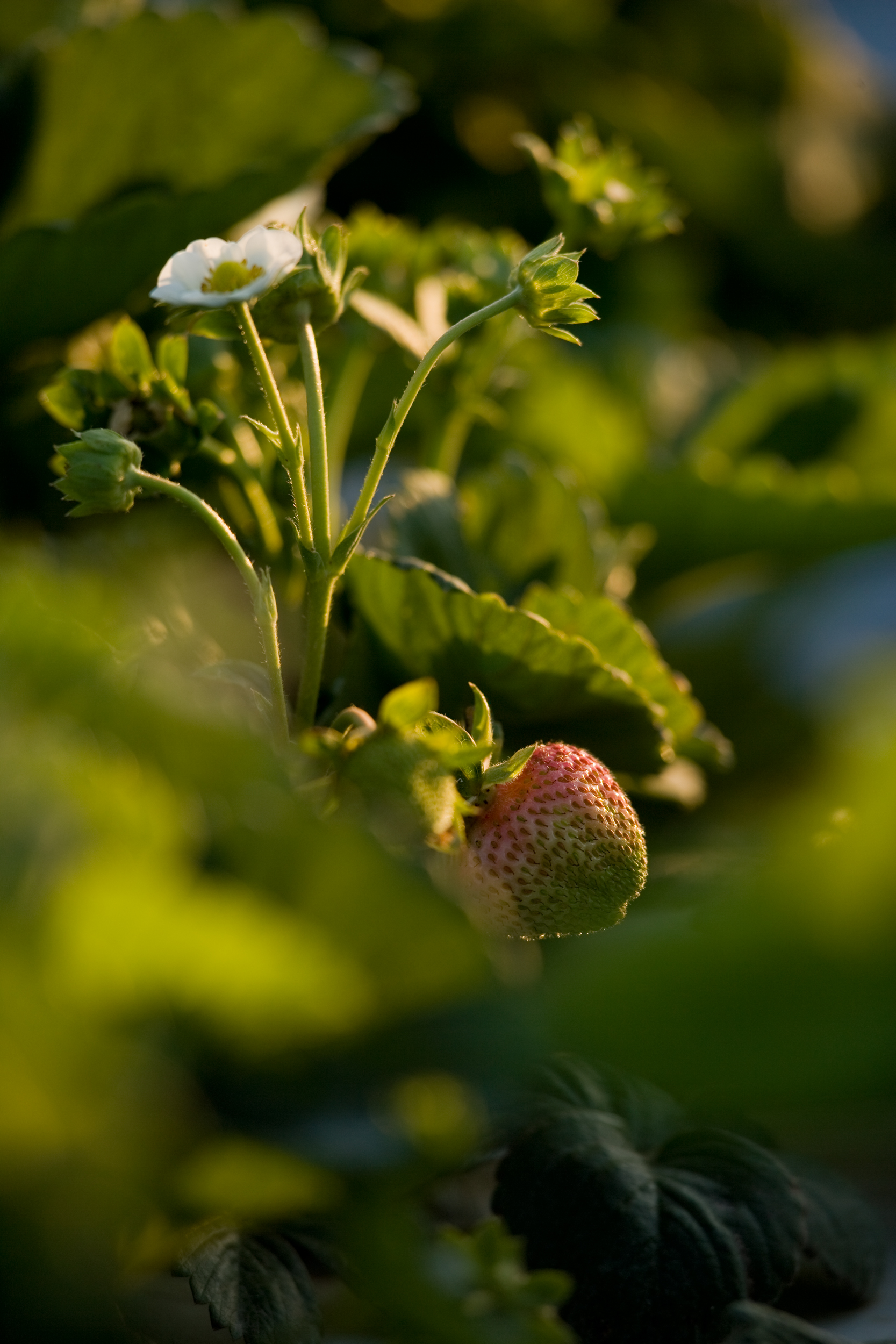 02_berry & blossom_SB_3446.jpg