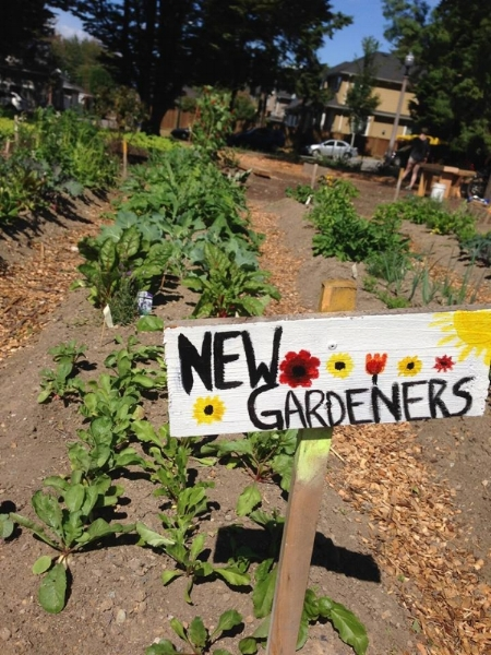 The New Gardener's at Riley Park group has been having a great growing season! In addition to hosting workshops on topics ranging from growing edible flowers to composting, this group is now harvesting salad greens, basil, mint, zucchini and cucumbers. Stay tuned for their summer wrap-up party happening in September!