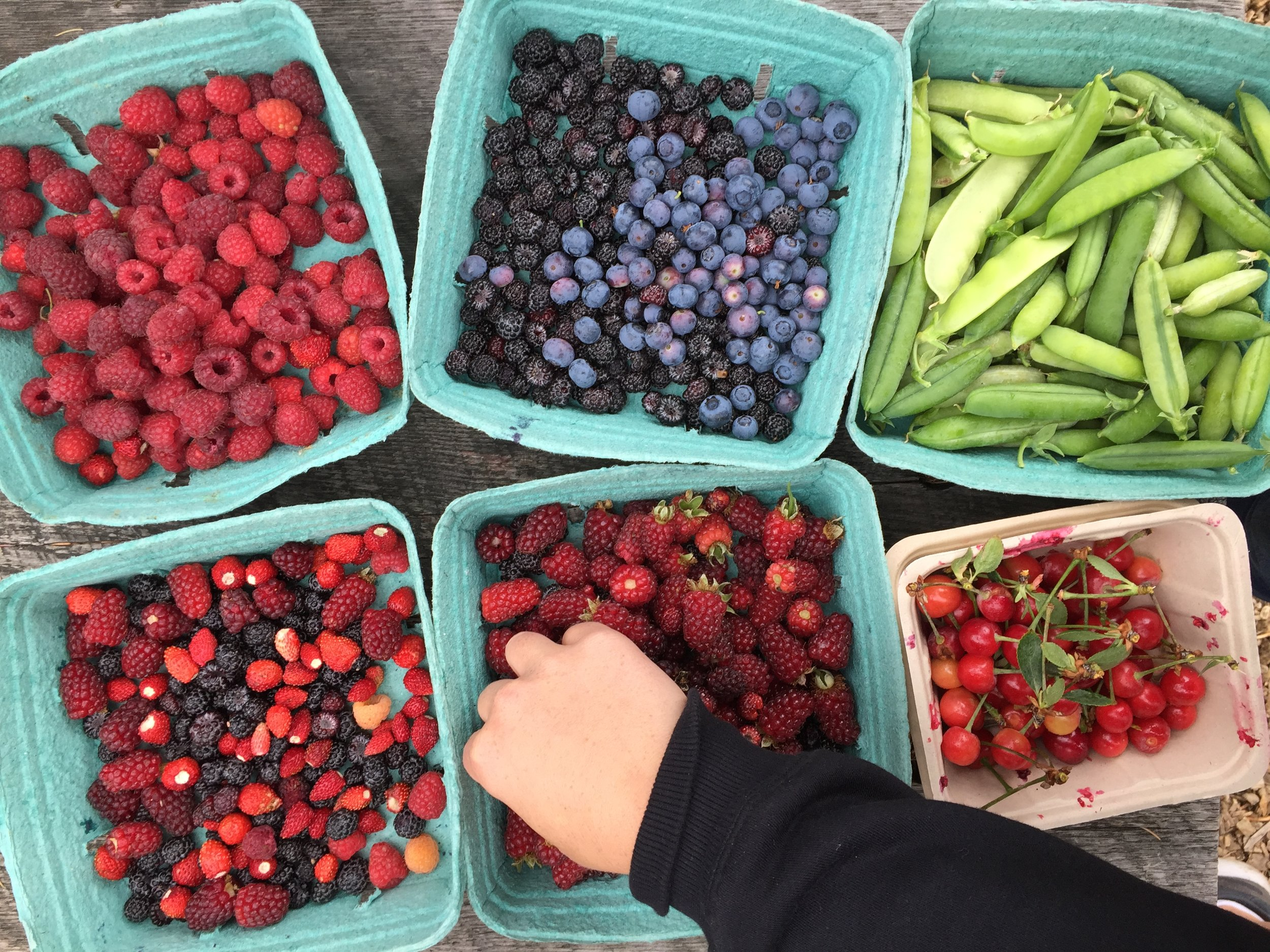 July 6 harvest.JPG