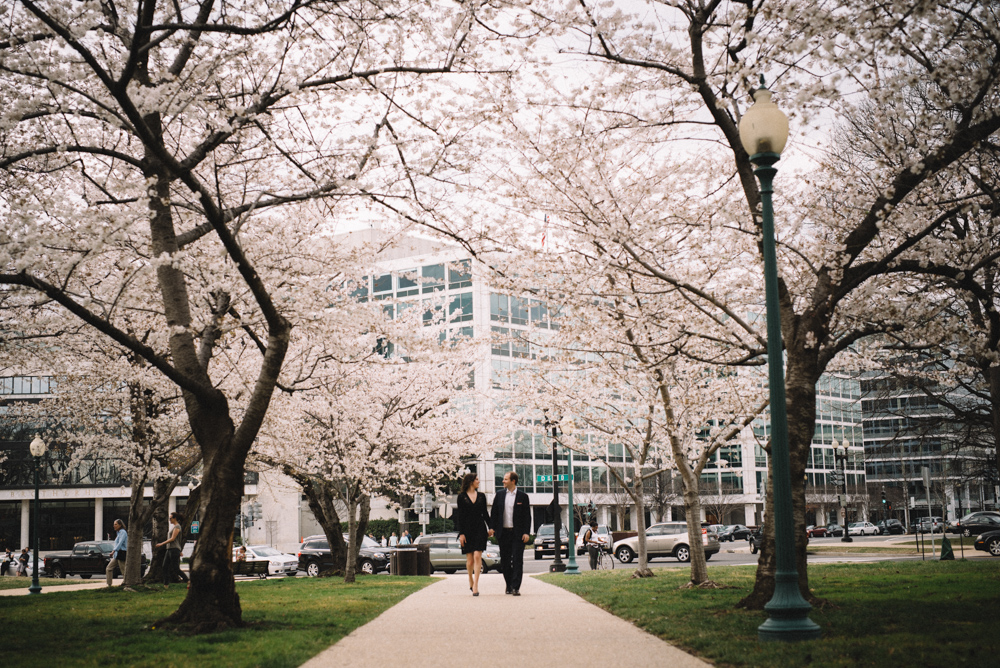dc cherry blossoms engagement session-16.jpg