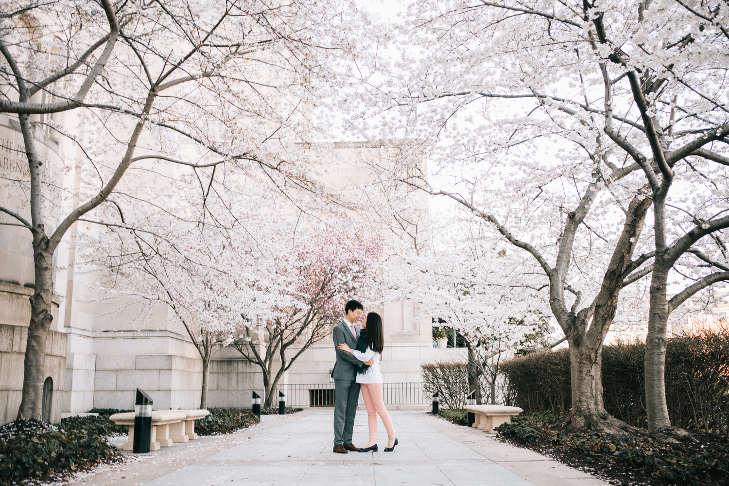 National Shrine Cherry Blossoms Engagement