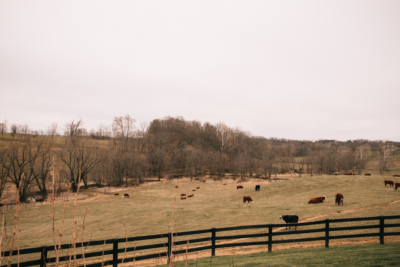 Shadow Creek Farm Wedding