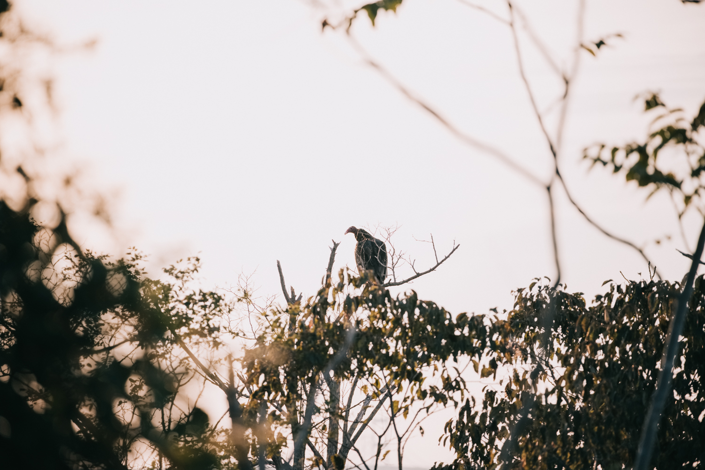 terrapin-nature-park-engagement -20.jpg