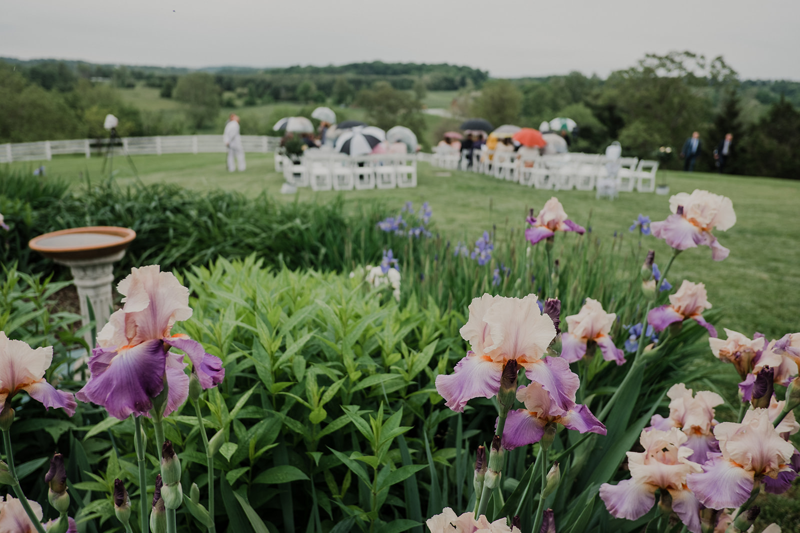 Irises are in bloom for a spring outdoor wedding ceremony at Blue Hill Farm in Waterford, VA.