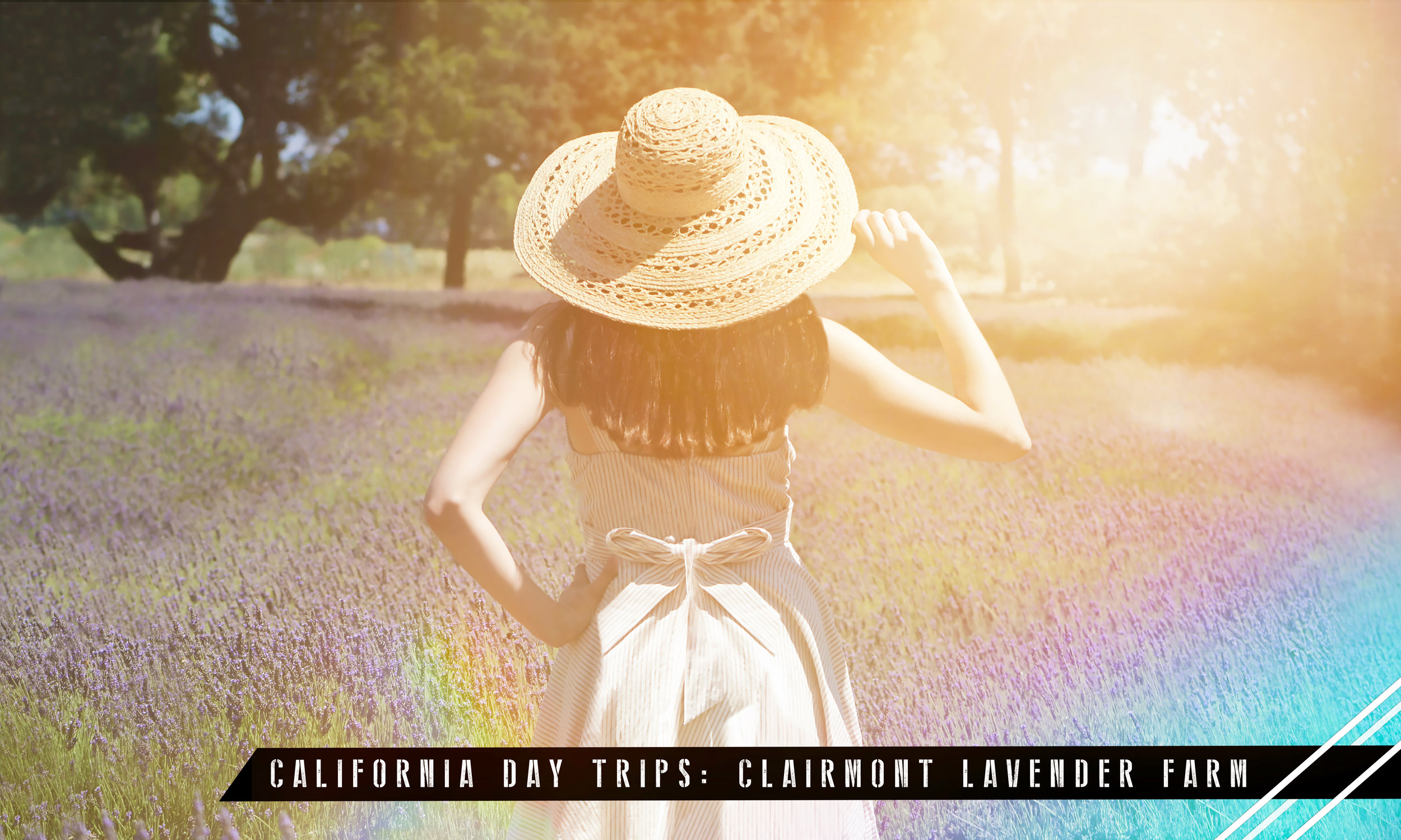 Featured Photo:  Located in the Santa Ynez Valley in Los Olivos, Clairmont Farms is home to acres of lavender fields and organic products.  Model:   Jacqueline Sherrard   Photographer:   J.W. CUDD