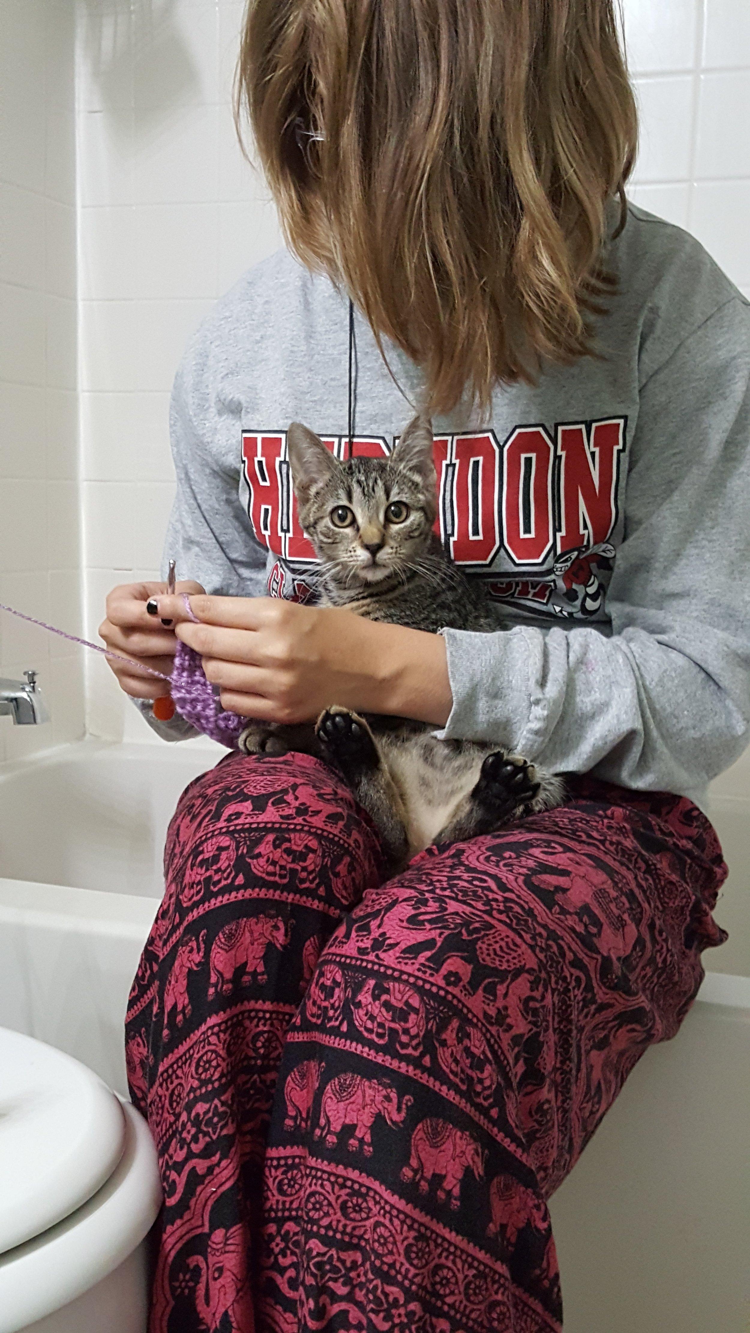 Teaching a kitten to crochet 😂