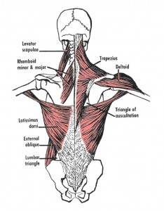 shoulder stabilizers
