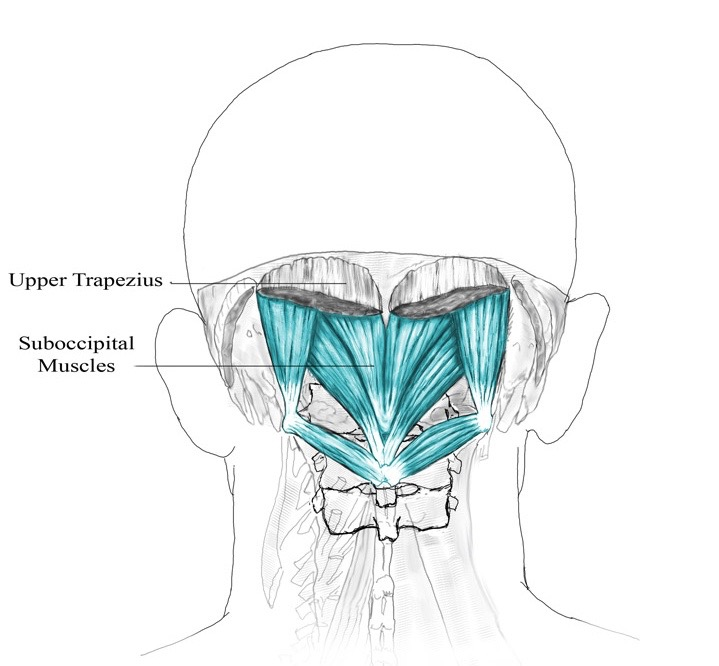suboccipitals.jpg