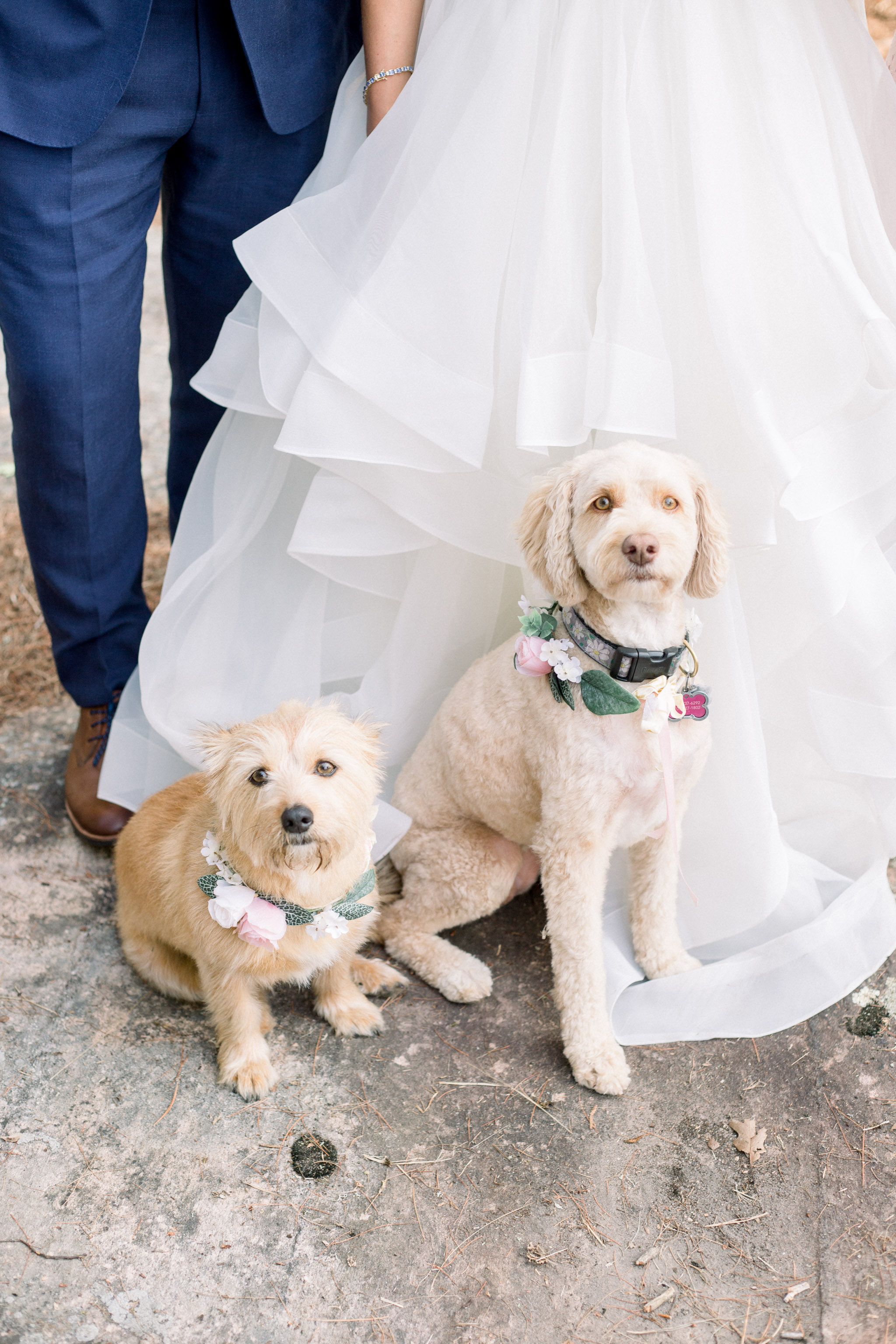 Pets in wedding photos.