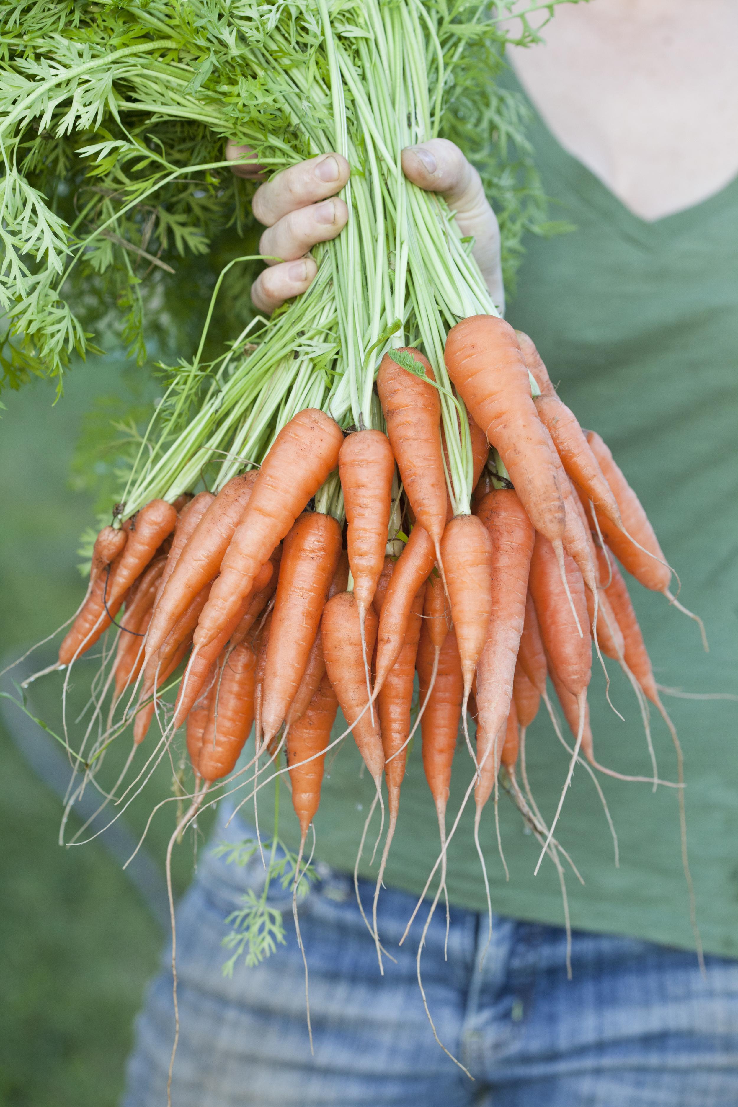 carrotBunch.jpg