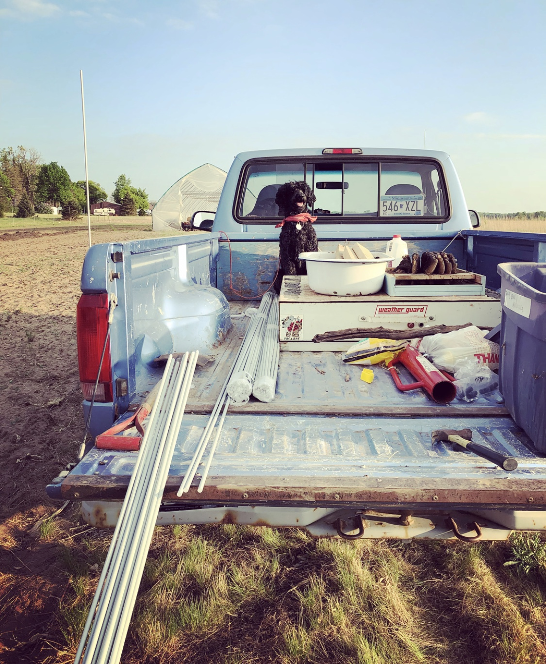 Sampson watching over the custom fiberglass fence posts in the back of the truck.