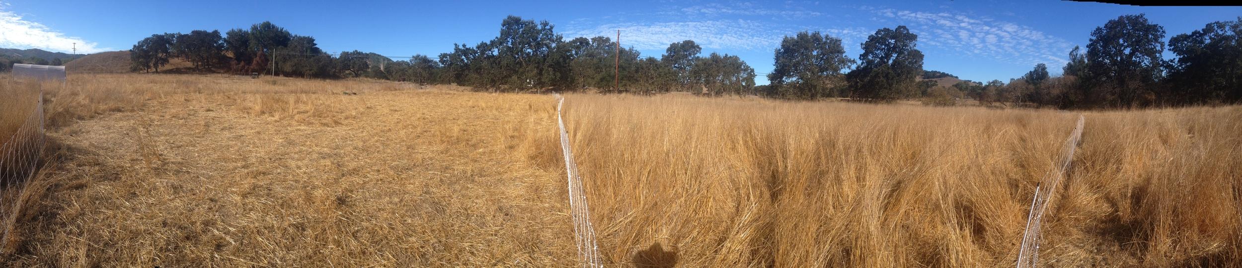 Pano_dry_grass.JPG