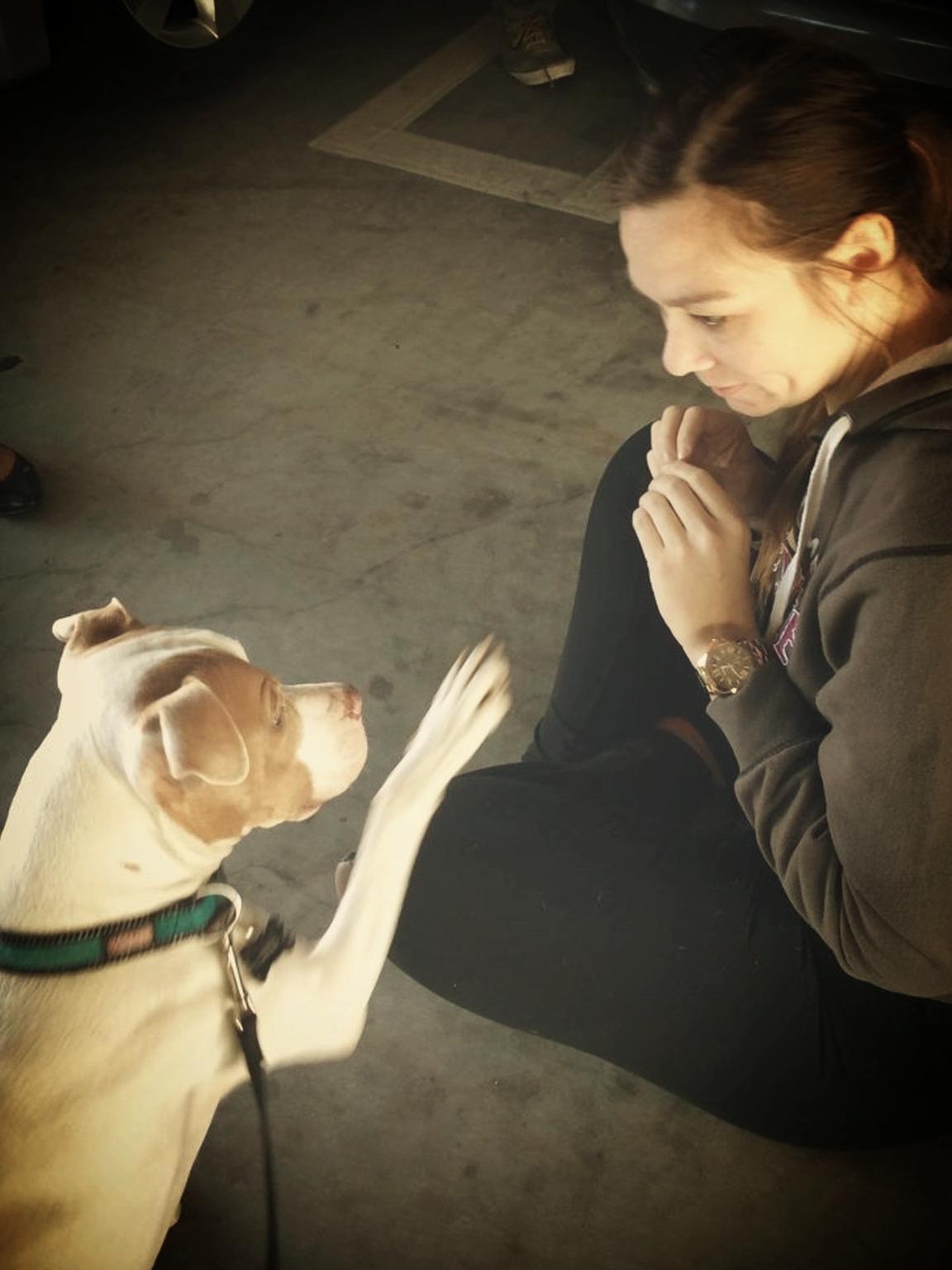 abigail dogs 3.jpg