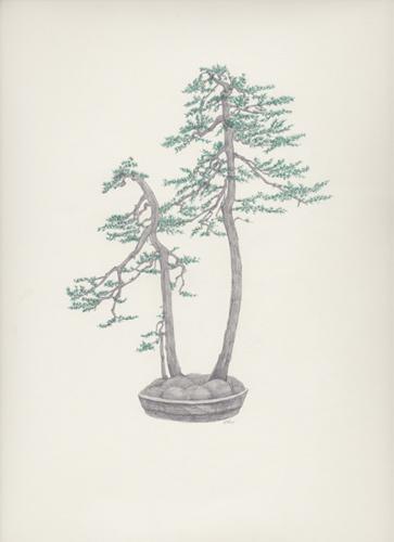 "Bonsai 4 盆栽 4 2013 pencil on paper 纸上铅笔素描 13.6 x 10.6 "" (34.5 x 26.9 cm)"