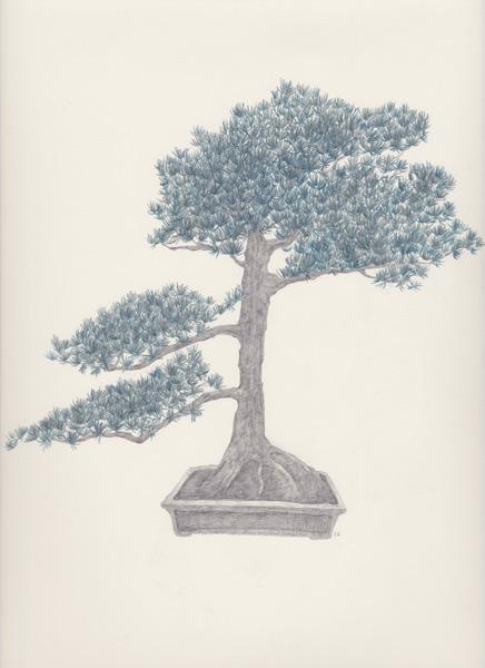 "Bonsai 6 盆栽 6 2013 pencil on paper 纸上铅笔素描 13.6 x 10.6 "" (34.5 x 26.9 cm)"