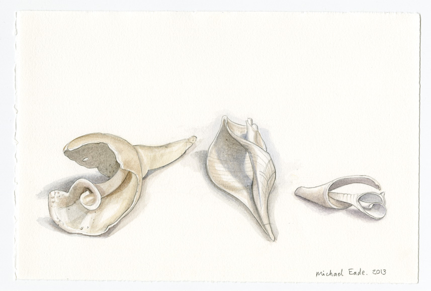 Horseshoe Crab Shell, Top View 马蹄蟹顶面,2013 Watercolor and graphite on Rives BFK paper 纸上水彩和炭笔 15 x 22.25 in. (38.1 x 56.5 cm)