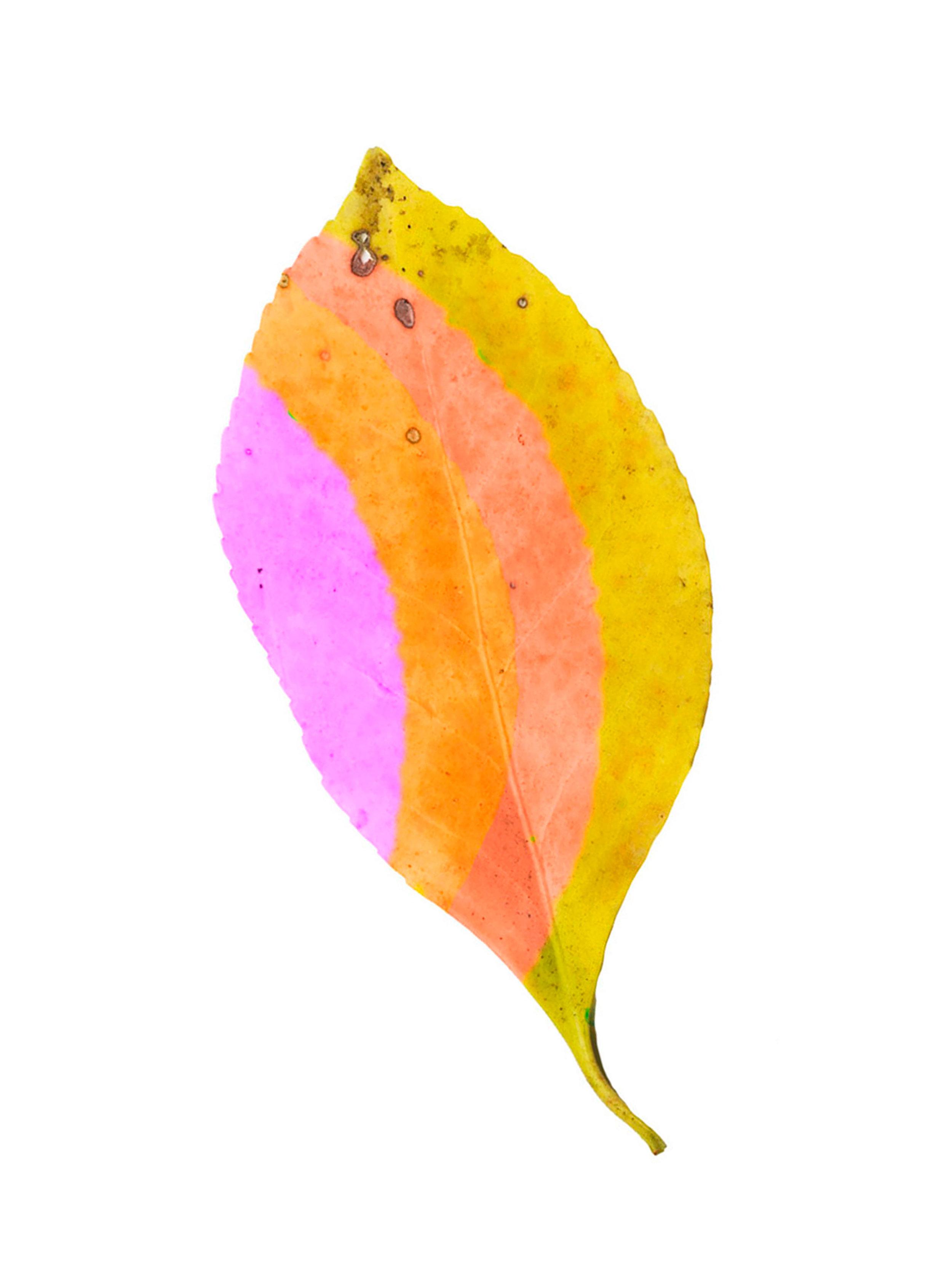LD_Leaf_2.jpg