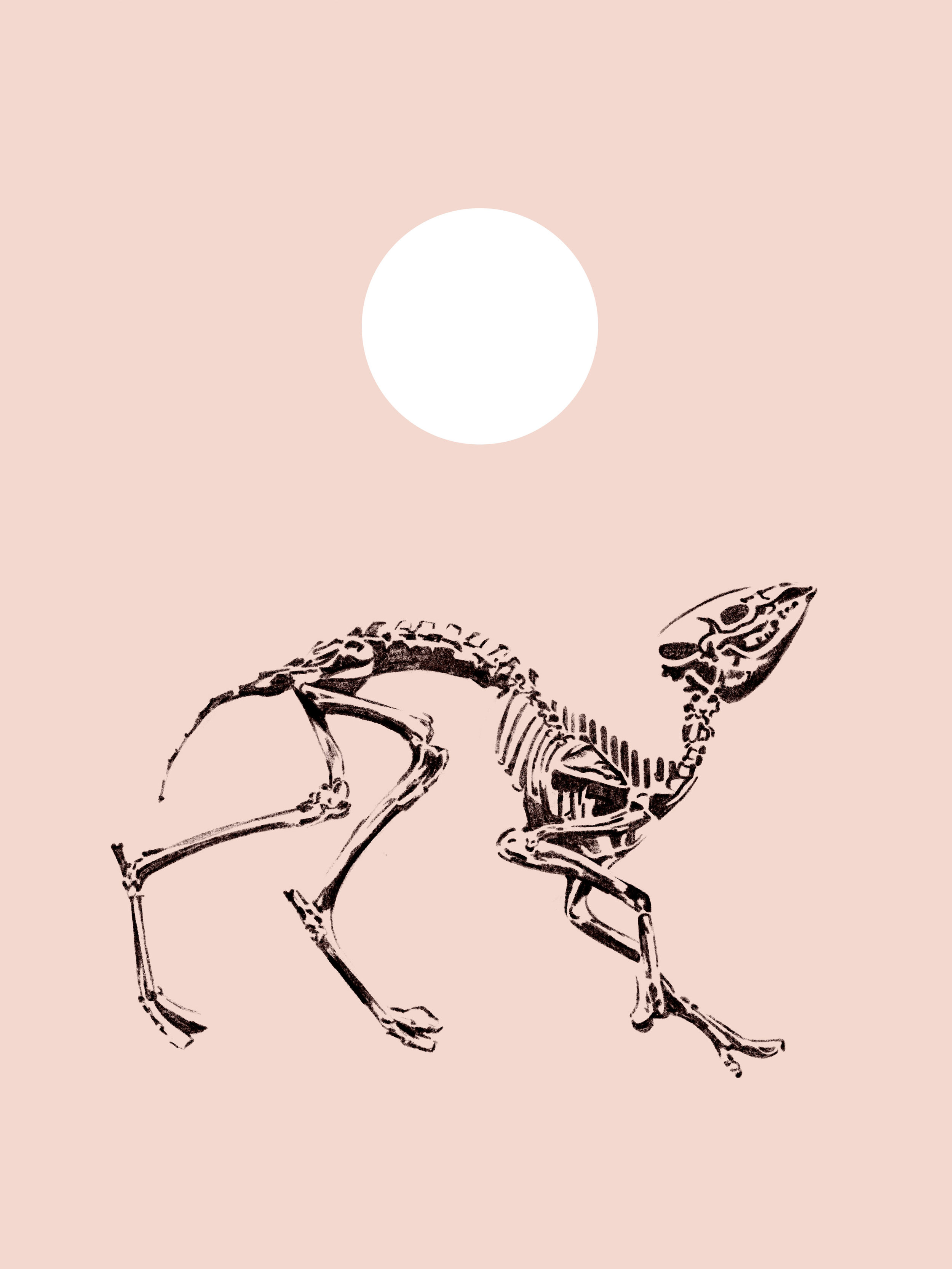 ALL_Fossils.jpg