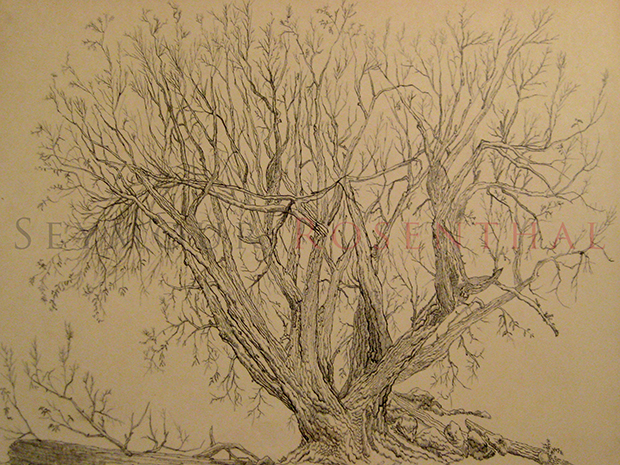 Study of a Tree 1960