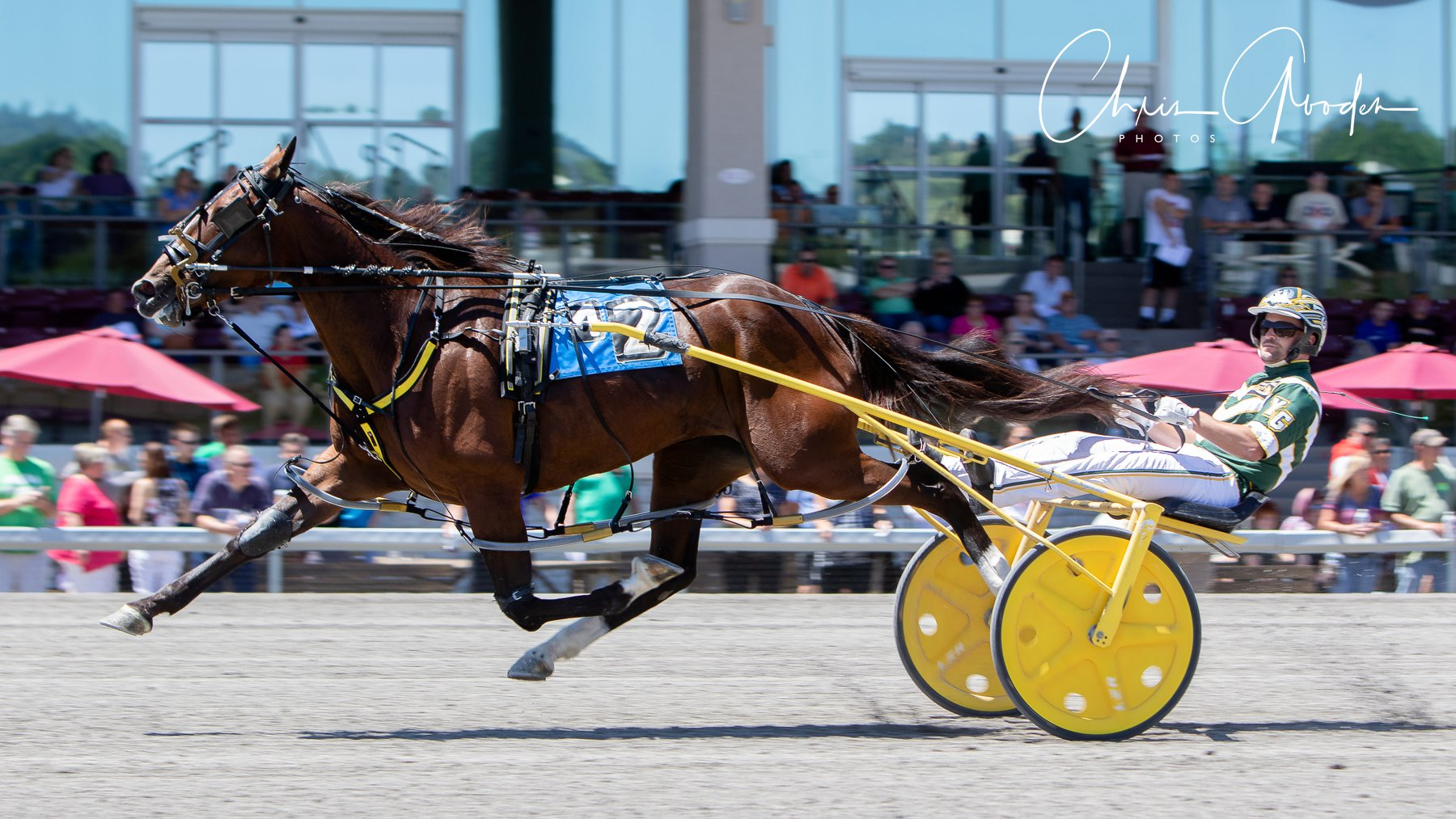 Warrawee Ubeaut (Sweet Lou, filly) winning at The Meadows in 1:52.4. Photo by Chris Gooden