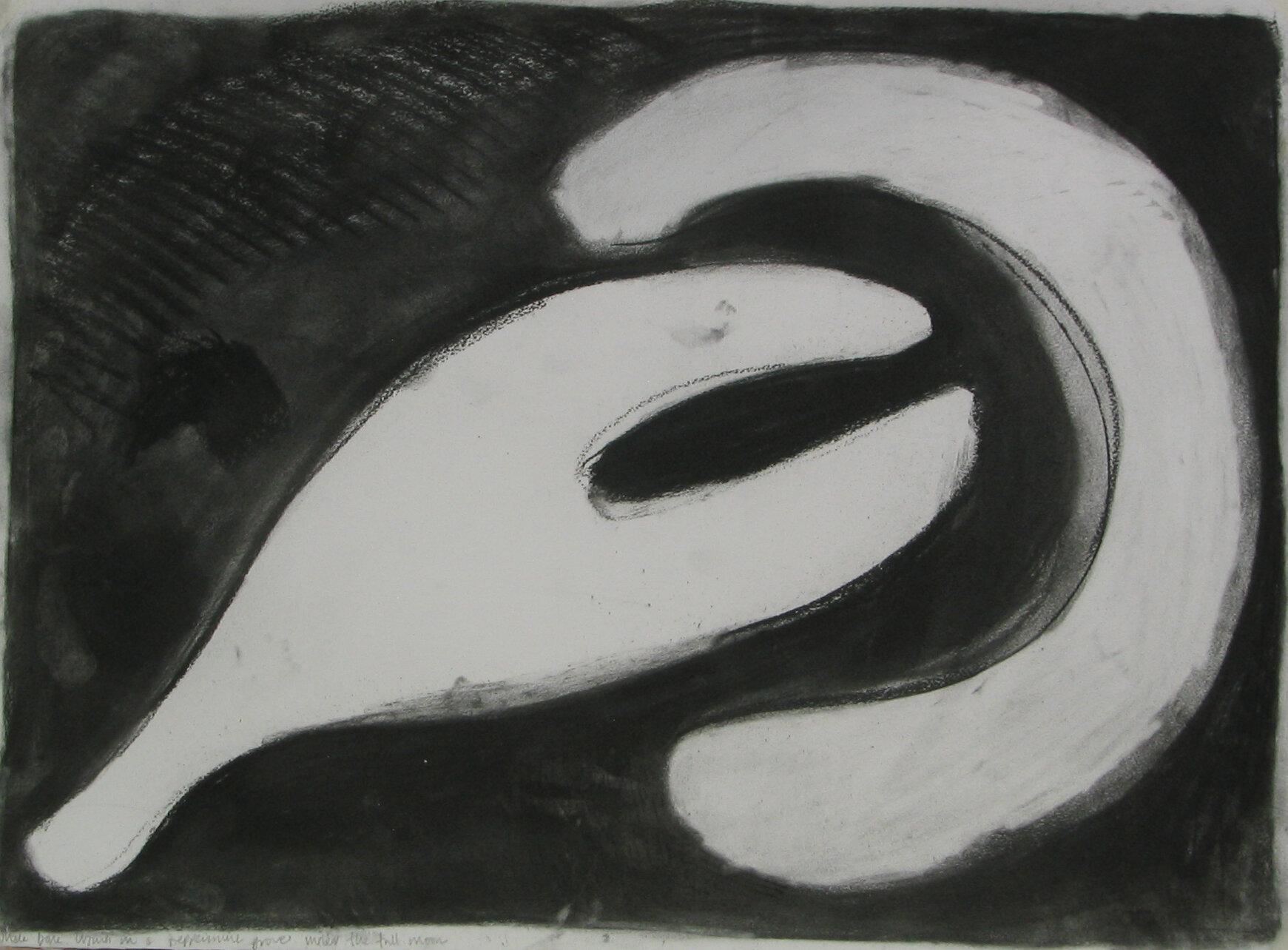 Whale bones in the peppermint grove.jpg