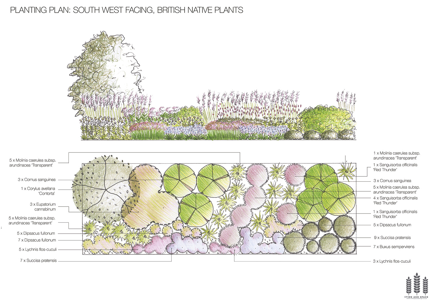 Planting plan - British native plants